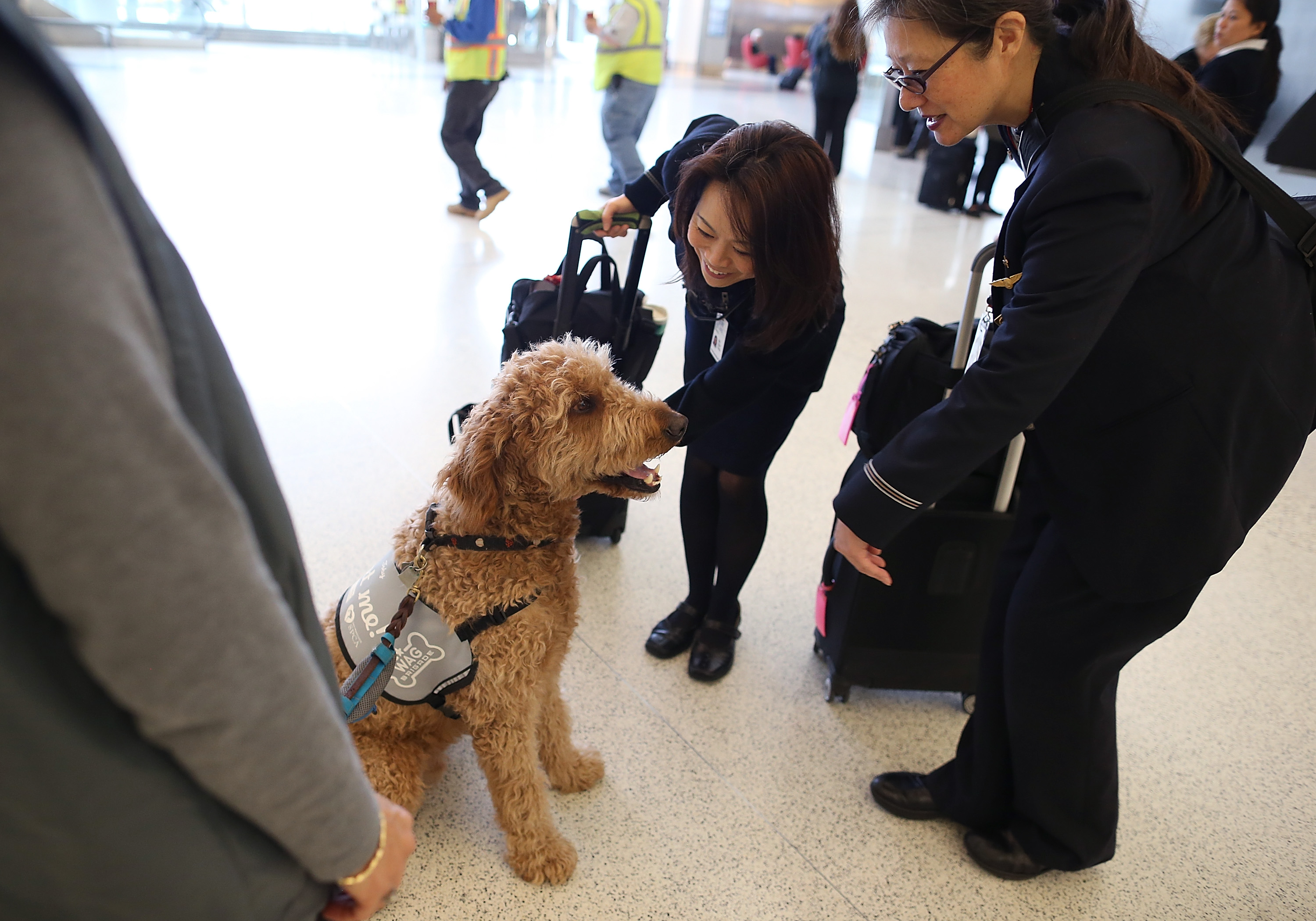 Delta tightens leash on comfort animals on flights for Delta airlines dogs in cabin