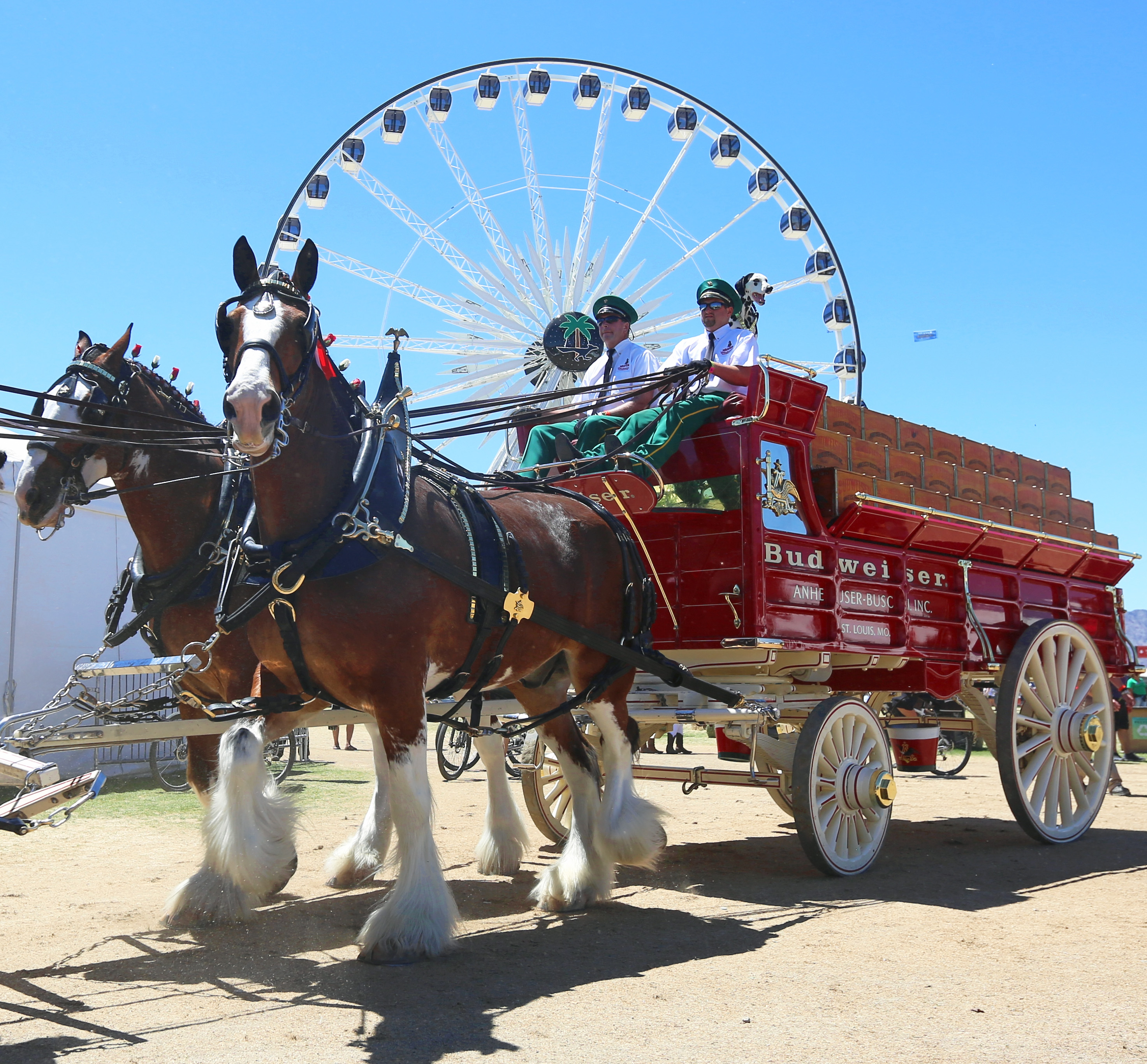 Sitting Out Super Bowl, Clydesdales Get Special